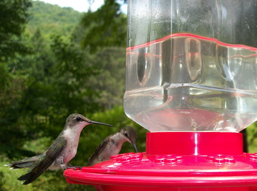 stockvault-thirsty-birds114427