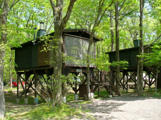 tree-House-Forest