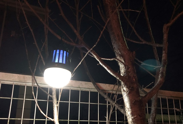 枝に吊り下げたモスキートランタン