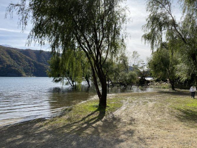 湖の中の木々