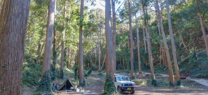 オレンジ村オートキャンプ場写真森林